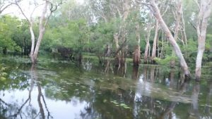 Yellow Water Billabong