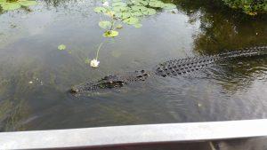 Maxi Yellow River Croc